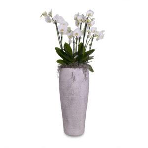 Orchideeën in hoge pot